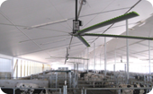Large Diameter Ceiling Fans
