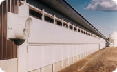 Broiler Breeder Barn System